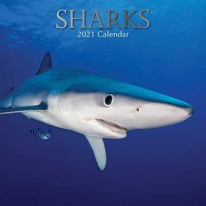 Calendrier 2021 Requin