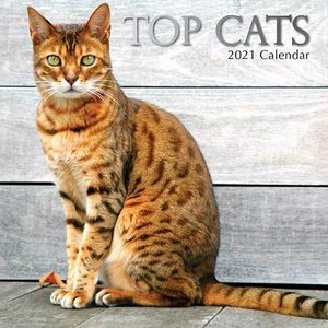 Calendrier 2021 Chat de race