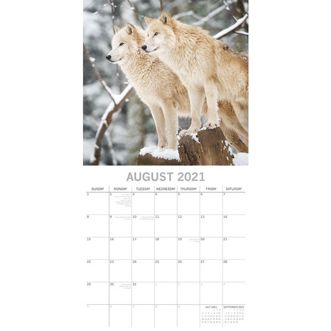 Calendrier Loup 2021 2022 Calendrier 2021 Loup