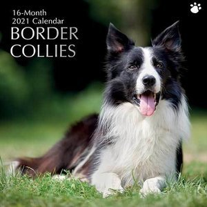 Calendrier 2021 Border collie
