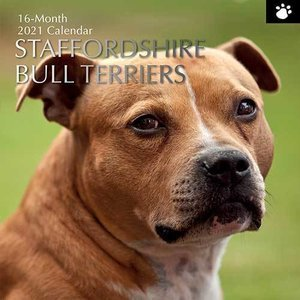 Calendrier 2021 Staffordshire bull terrier