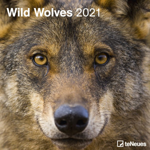 Calendrier 2021 Loup
