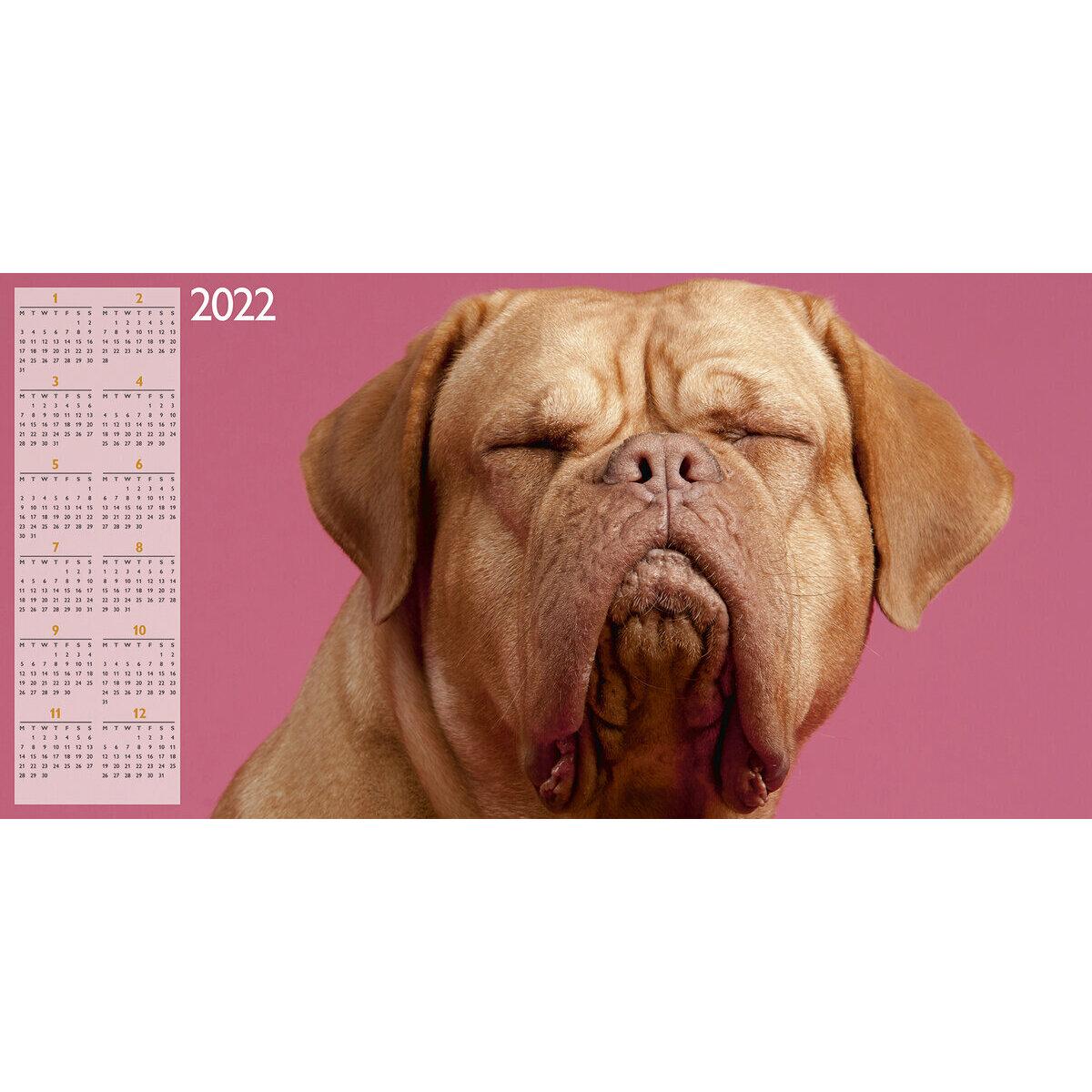 Calendrier 2021 chien fun avec poster offert