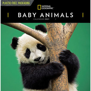 Calendrier 2021 Bébé animaux National Geographic