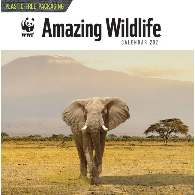 Calendrier 2021 Animaux Sauvage étonnant   WWF