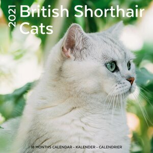 Calendrier 2021 British shorthair