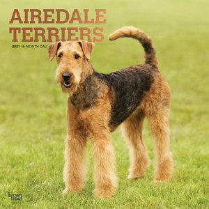 Calendrier 2021 Airedale terrier