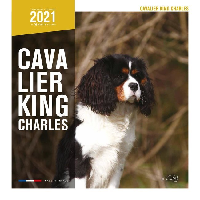 Calendrier 2021 Cavalier king charles