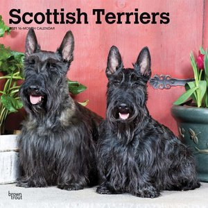 Calendrier 2021 Scottish terrier