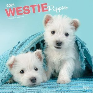 Calendrier 2021 Westie chiot