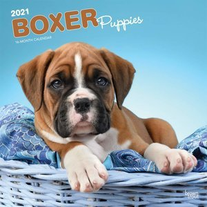 Calendrier 2021 Boxer chiot