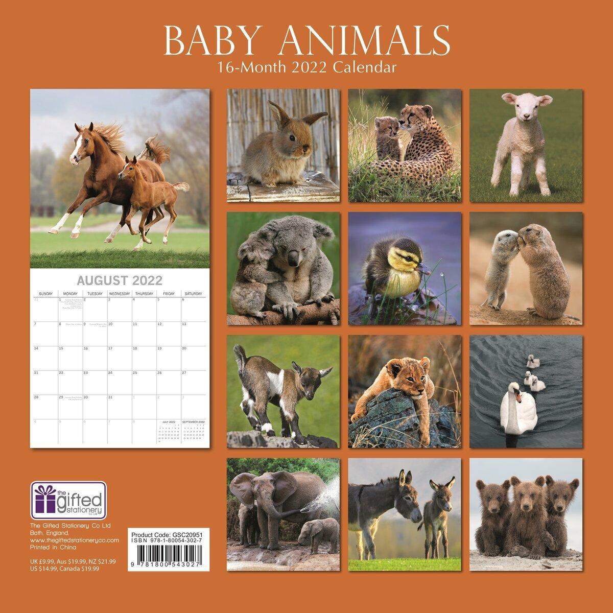 Calendrier Animaux 2022 Calendrier 2022 Bébé animaux