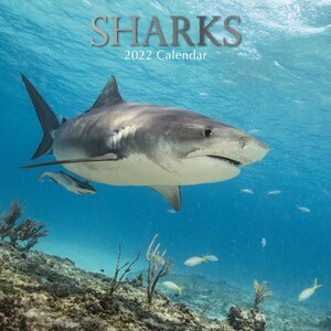 Calendrier 2022 Requin