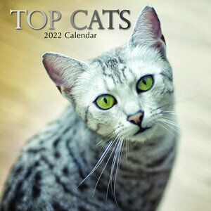 Calendrier 2022 Chat de race