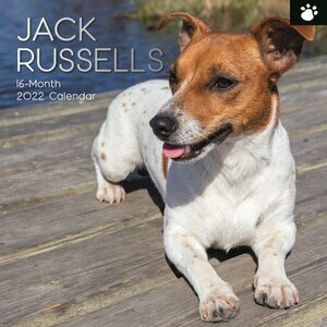 Calendrier 2022 Jack russell