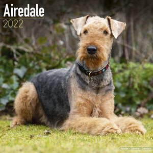 Calendrier 2022 Airedale terrier