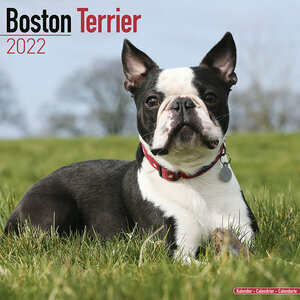 Calendrier 2022 Boston terrier