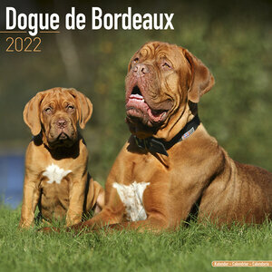 Calendrier 2022 Dogue de bordeaux