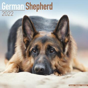 Calendrier Concours Chien De Troupeau 2022 Calendriers chiens 2022