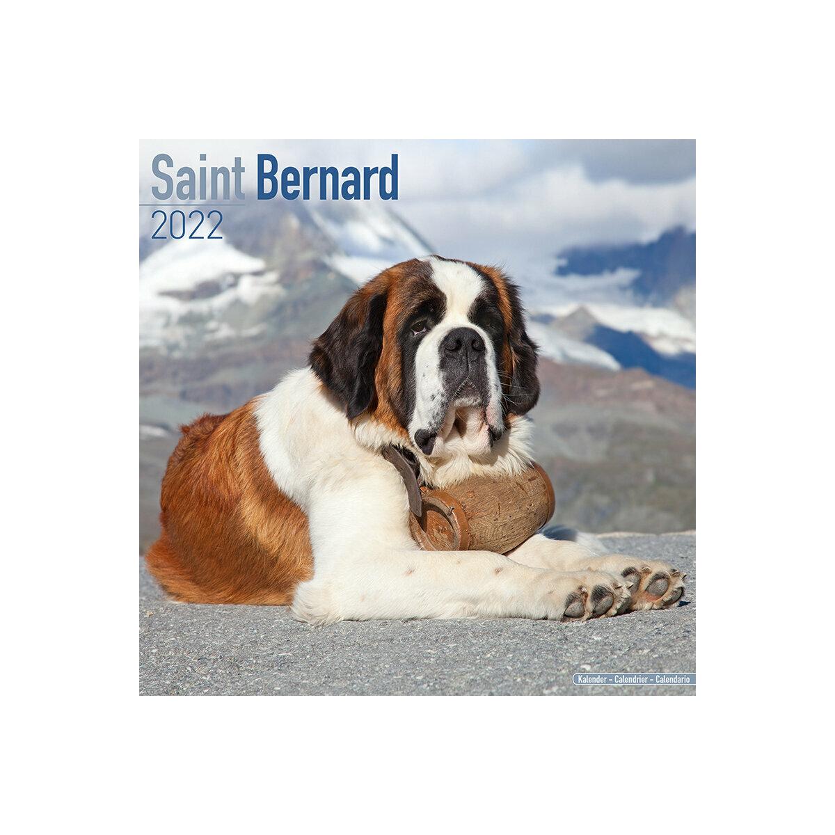 Calendrier 2022 Saint calendrier Saint Bernard 2022