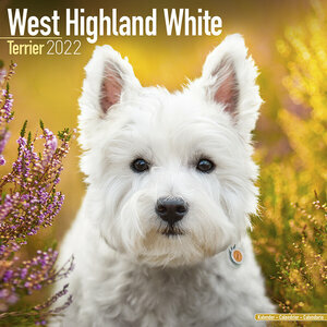 Calendrier 2022 West highland white terrier