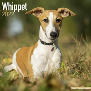 Calendrier 2022 Whippet